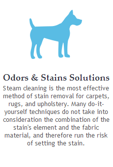 pet stains removals